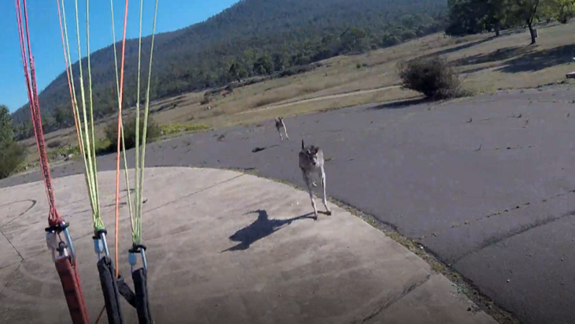 Paraglider Lands Perfectly In Australia, Only To Be Immediately Attacked By A Kangaroo