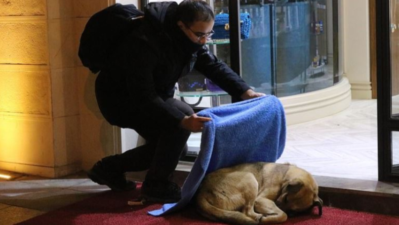 Turkish Dentist Photographed Giving Out Blankets To Stray Animals