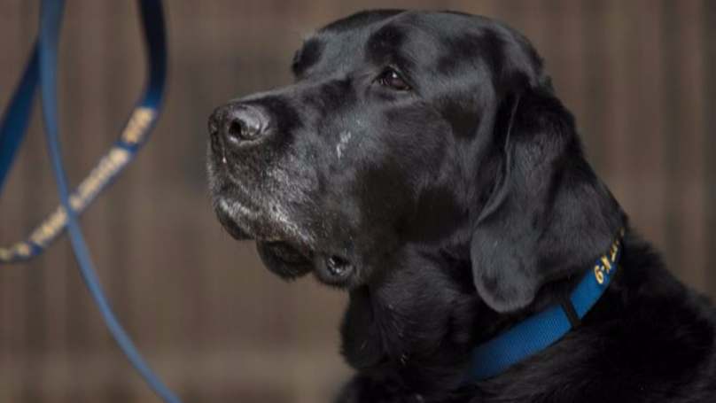​Dog Owners Warned Over Deadly Disease Found In England