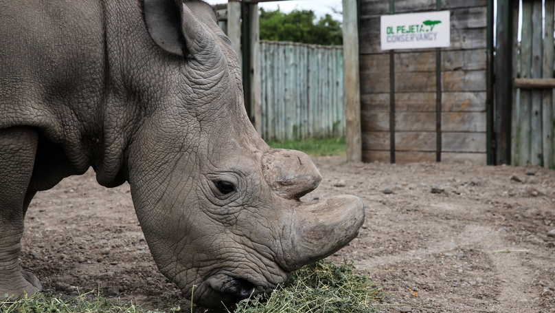 Sad Photos Emerge Of The Last Male Northern White Rhino's Final Moments