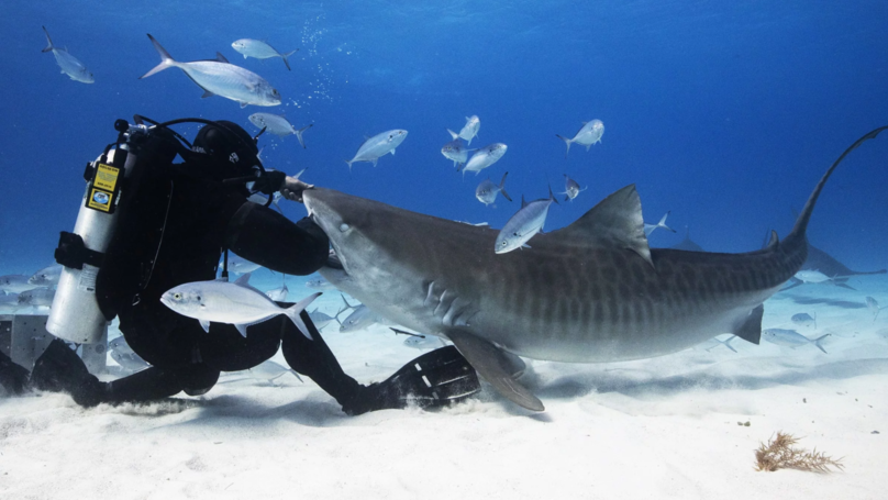 Marine Biologist Has Been Bitten More Than 1,000 Times By Sharks