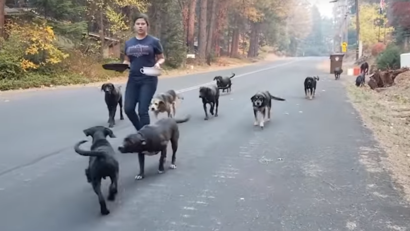 Heartwarming Video Shows Moment Thirteen Dogs Are Rescued From California Wildfires
