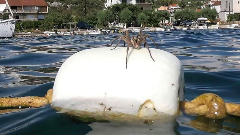 ​Mysterious Tarantula Floating On Buoy Baffles Beachgoers