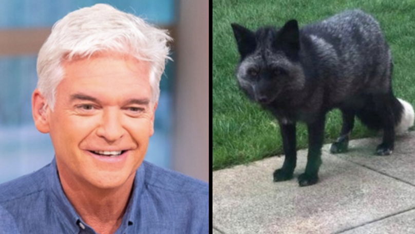 Someone Quite Literally Found A Silver Fox Roaming In Their Garden