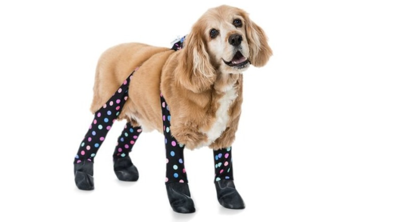Dog Leggings Exist To Keep Pooches Warm Through The Winter