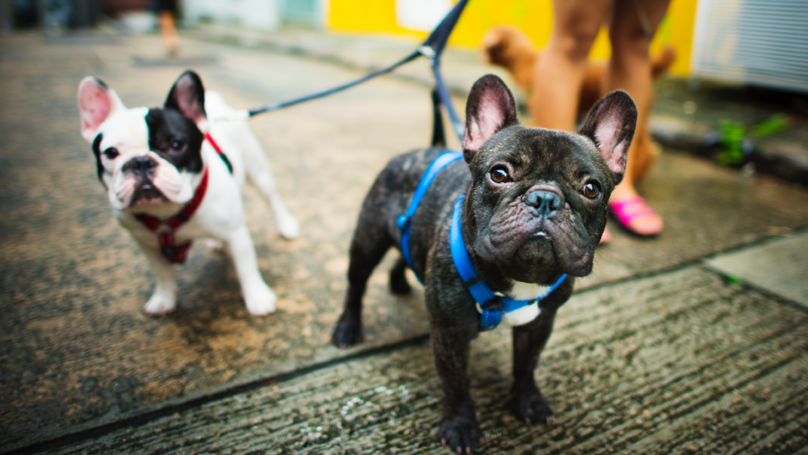 ​The UK's Most Popular Pet Names Have Been Revealed