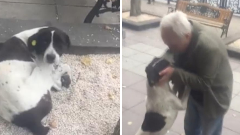 Dog Reunited With His Owner After Three Years Of Being Missing