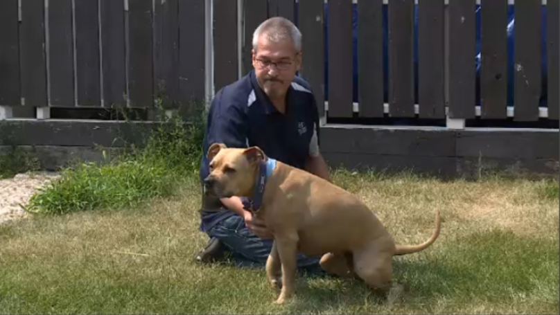 Man Says That Police Should Pay For Vet After They Shot His Dog