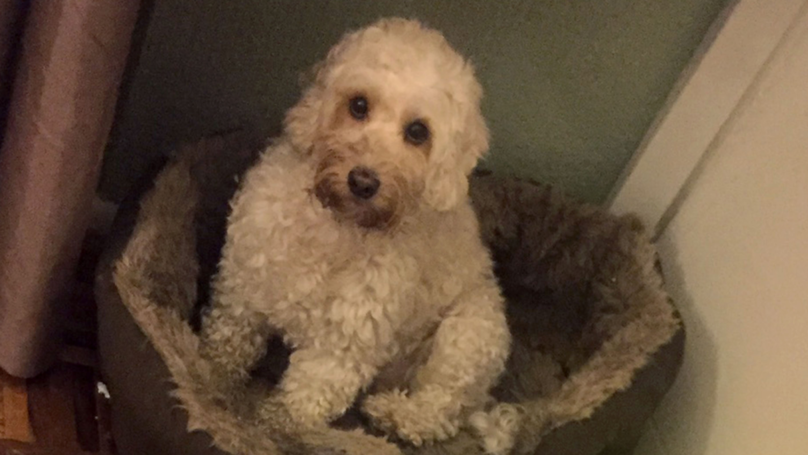 Dog Causes £1,500 Worth Of Damage To Front Door After Owner Pops Out