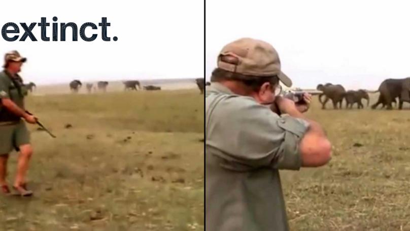 猎人开枪打死了一头大象被牛群的指控