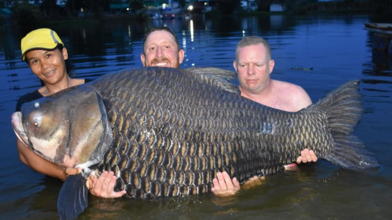 Brit Catches 'World's Biggest Carp' In Thailand Weighing A Whopping 232lbs