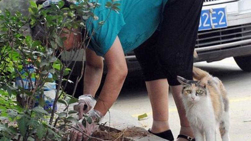 Grief Stricken Cat Tries To Revive Murdered Kittens