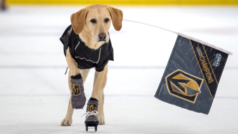 Benny The Labrador Is The World's First Ice Skating Dog