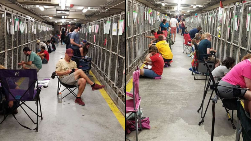 Americans Are Skipping 4th July Fireworks To Comfort Scared Shelter Dogs