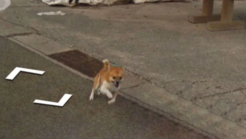 Adorable Dog Photobombs Google Street View Camera