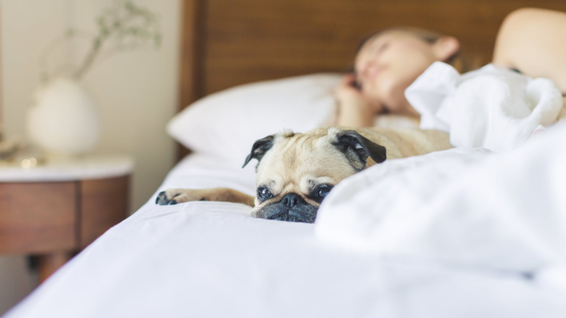​Letting Your Dog Sleep On Your Bed Is Key To A Good Night's Sleep, Study Says
