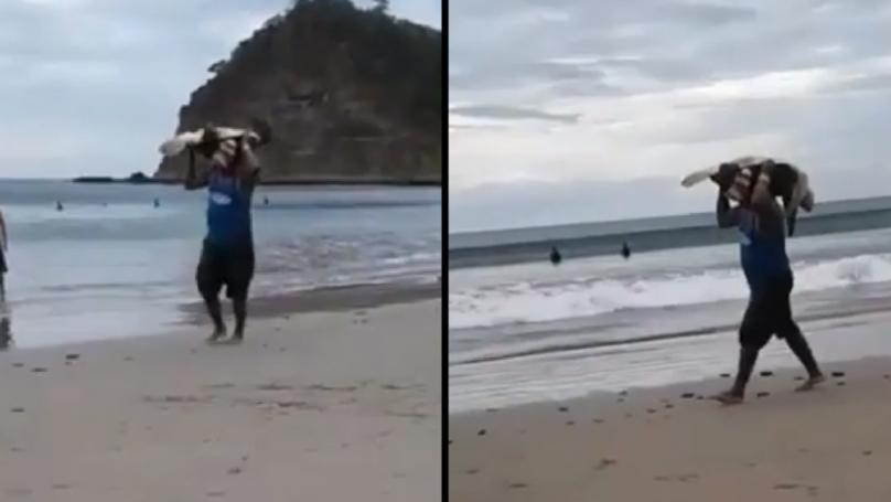 偷猎者窃取保护海滩的无助的海龟