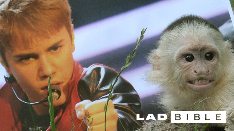 Justin Bieber's Monkey Is Still Traumatised By The Experience Of Living With The Pop Megastar