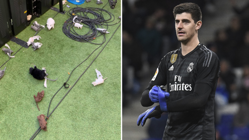 Atletico Madrid Fans Throw Toy Rats At Thibaut Courtois