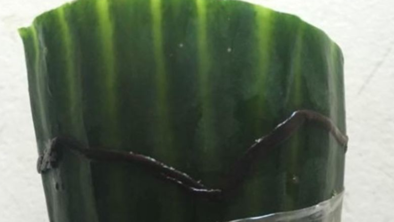Someone Found A Dead Worm On Their Tesco Cucumber And Had An Awesome Funeral Response