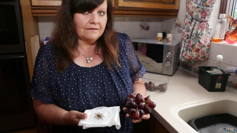Grandma Finds Tarantula In Carton Of Supermarket Grapes