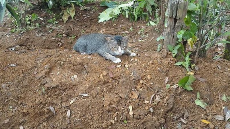 Mourning Cat Spends An Entire Year By Dead Owner's Grave Stone