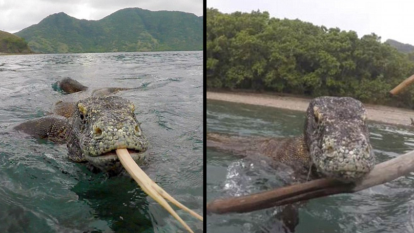 Photographer Fends Off Komodo Dragon From His Boat With Just A Pair Of Sticks