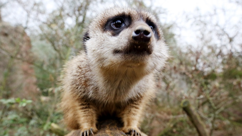 Boy Receives Death Threats After Accidentally Killing Meerkat At Hungarian Zoo