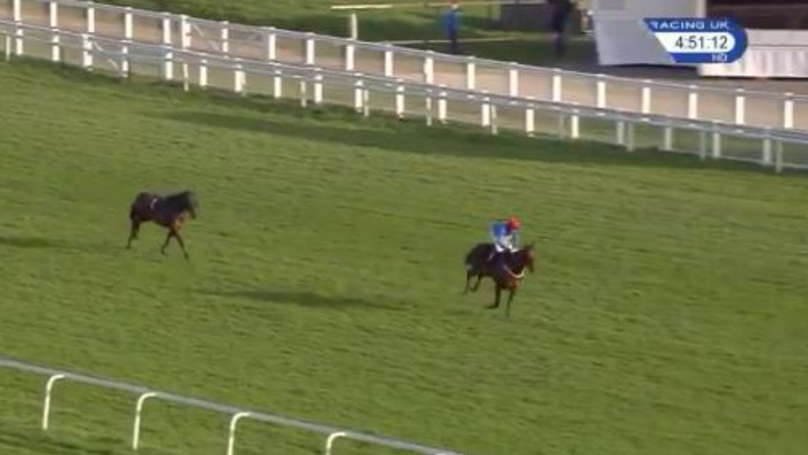 WATCH: Jockey Blows Massive Lead After Misjudging Winning Post