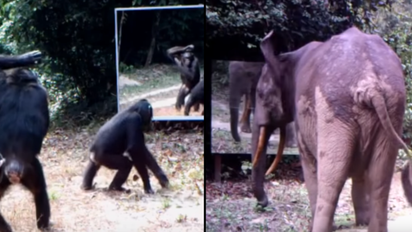 Animals Looking At Themselves In Mirrors Have The Most Hilarious Reactions