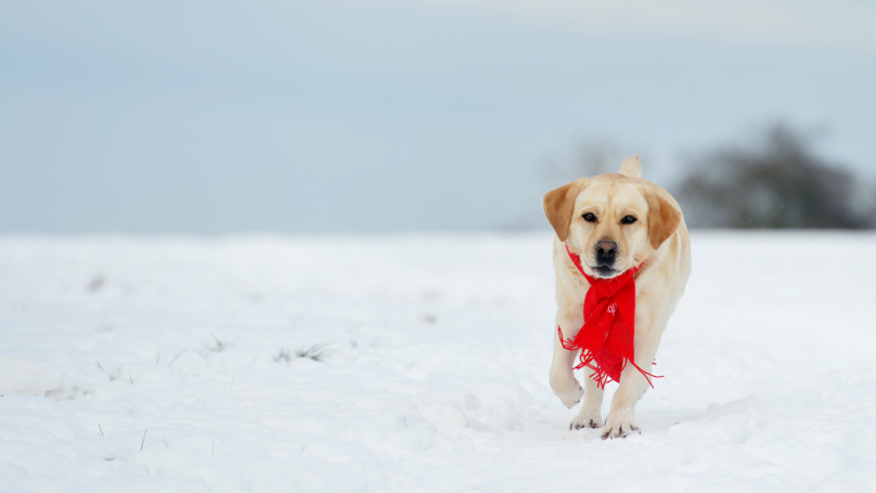 Dog Owners Warned To Take Care With Pets In The Cold Weather And Snow
