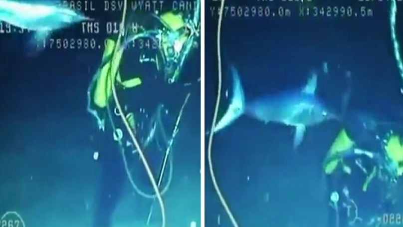 WATCH: Angry Swordfish Almost Impales Lucky Diver
