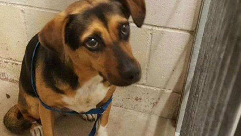 Heartbroken Dog 'Abandoned By Family For A Holiday' Has Been Adopted
