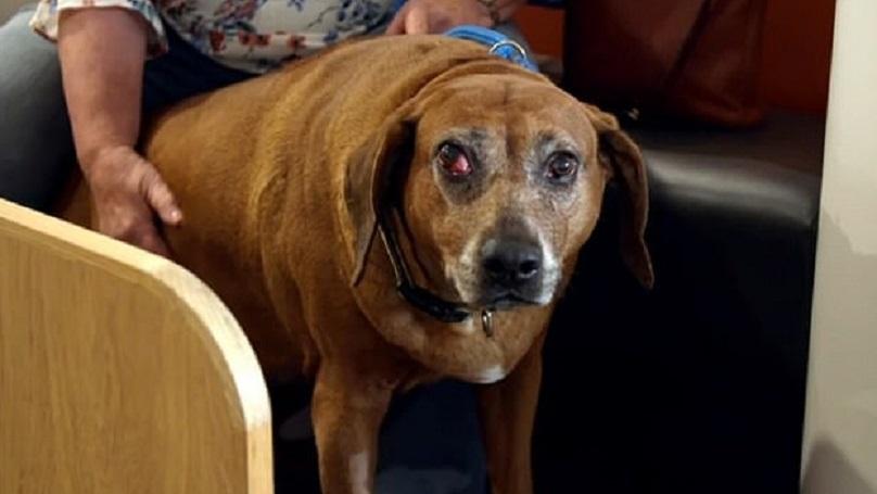 Cancer Survivor Devastated To Learn Her Dog Has Disease On 'Supervet'