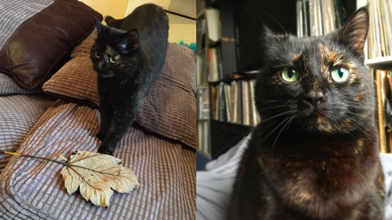 Cat Brings Her Owner A Leaf Every Morning As A Gift