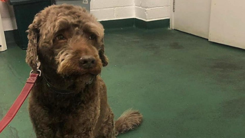 Dog Eats Envelope Containing £160 - Landing Owners With £130 Vet's Bill