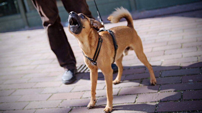 Your Dog Can Tell When Someone's A Bad Person, According To Science