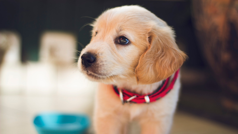 The UK City That Pampers Its Pets Most Has Been 'Revealed'