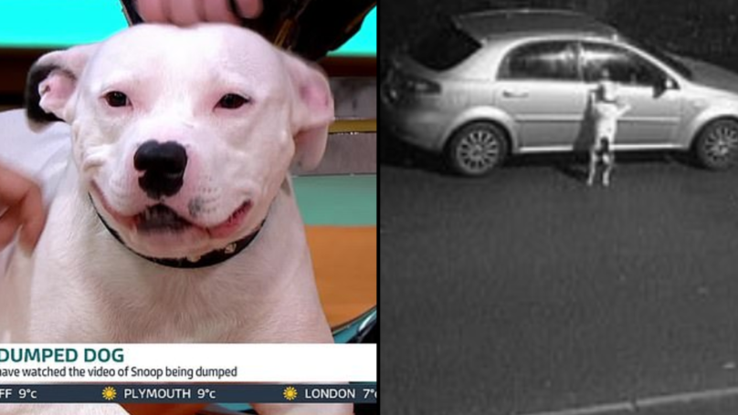 Snoop The Abandoned Staffie Is In 'Good Condition' As He Appears On 'Good Morning Britain'