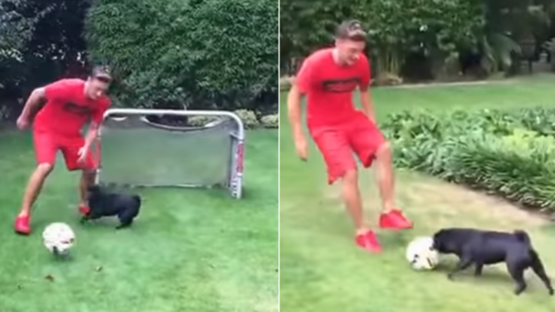 Even Mesut Ozil's Dog Can Tackle Him