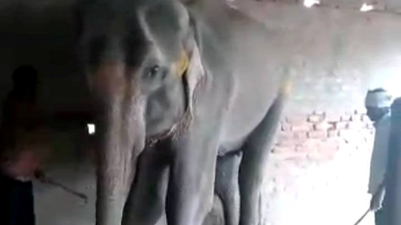 ​Heartbreaking Footage Shows Final Hours Of Elephant Living In Captivity