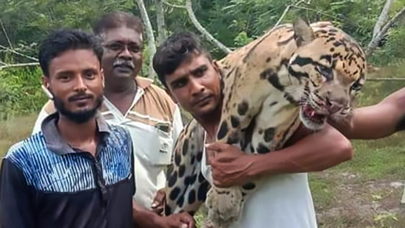 ​Suspected Poachers Pose With Corpse Of Rare Clouded Leopard
