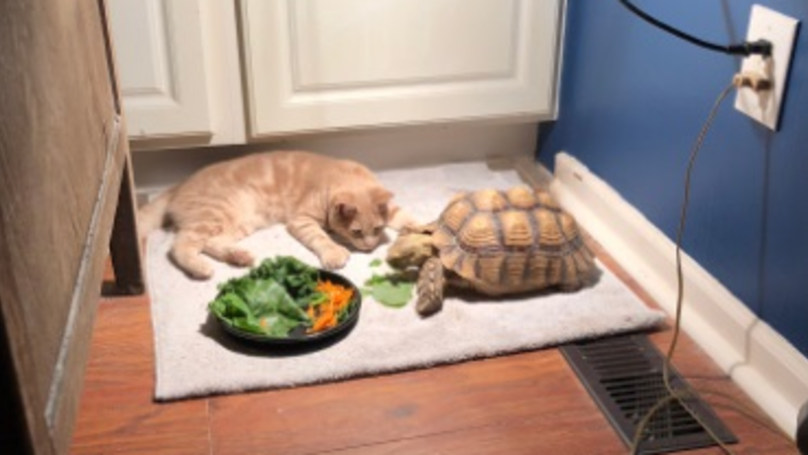 The Unlikely Friendship Between A Cat And A Tortoise Has Made The World Fall In Love