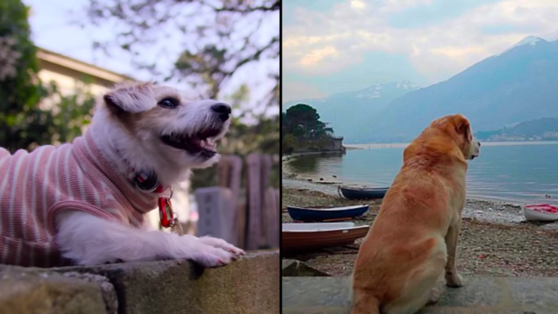 "Netflix揭示纪录片""狗"",它看起来惊人"