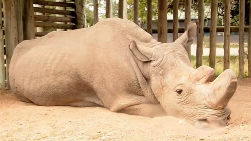 This Image Of The Last White Rhino LAD Is Breaking The Internet's Heart