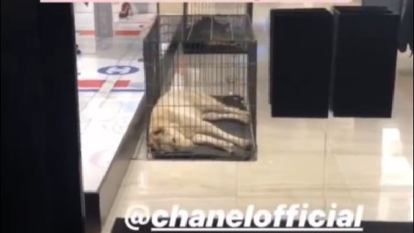 Reality Star Tabitha Willett Outraged After Seeing Dogs In Cages At London Chanel Shop