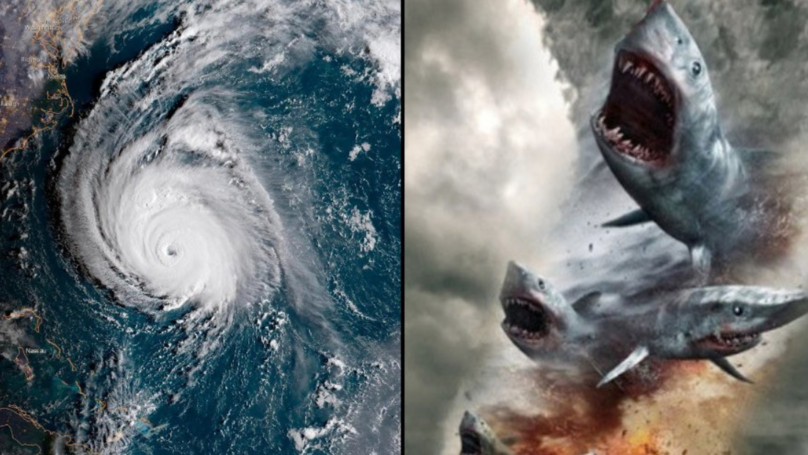 Someone Started A Rumour That Hurricane Florence Contained Sharks And People Believed It