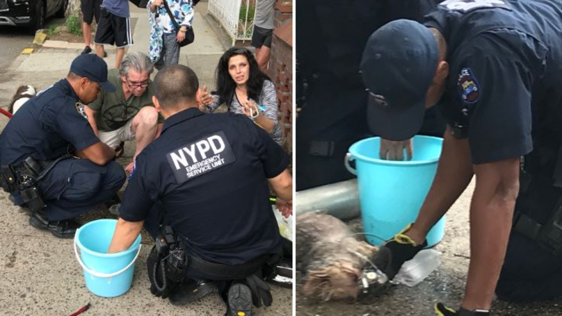 Two Dogs Left In Boiling Hot Car While Owner Got Drunk