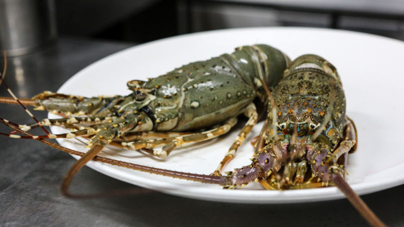 ​Switzerland Becomes The First Country To Make Boiling Live Lobsters Illegal