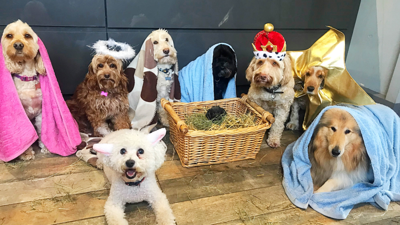 ​Dog Groomers Recreate The Nativity Scene With Adorable Pooches